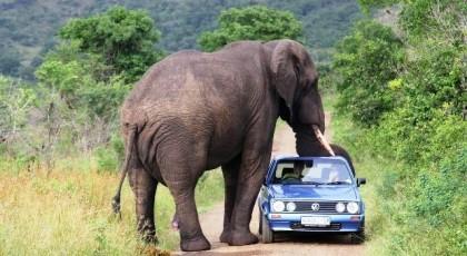 elefanti sulmon automjetin