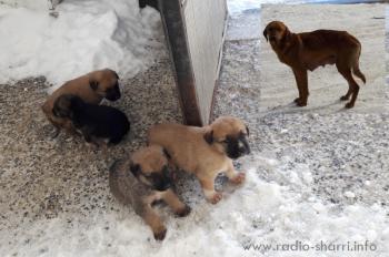 Skandaloze: Dragashi bëhet vendi ku hidhen qentë!