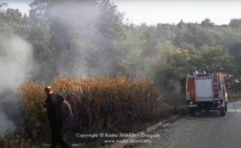 Në Bellobrad i hedhin ilegalisht mbeturinat pastaj i djegin! (Video)